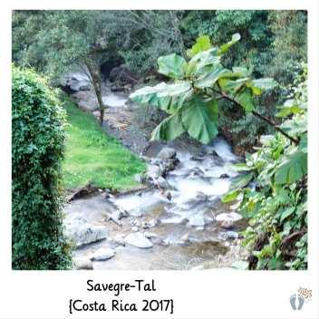 Flusslauf im «Savegre-Tal» {Costa Rica 2017}