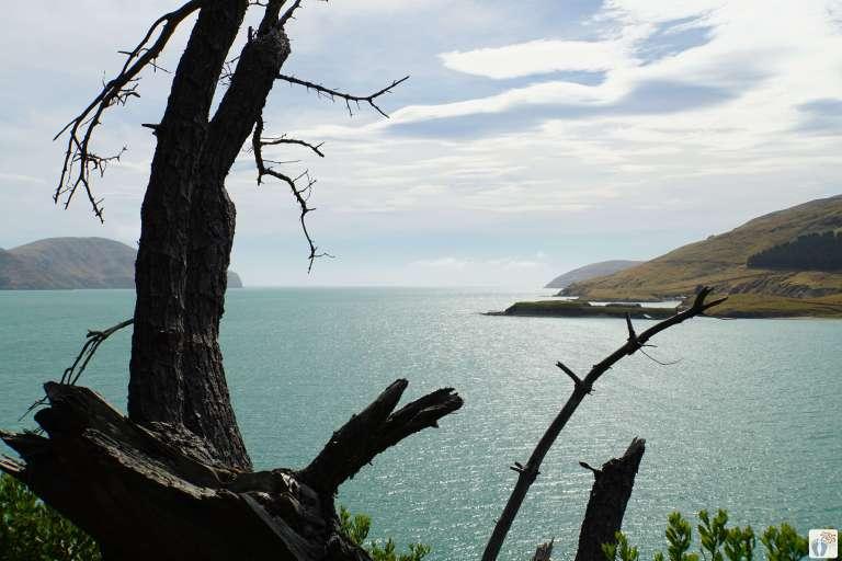 Küstenwanderung: Ausblick {Reisetagebuch «Roadtrip durch Neuseeland mit dem Bus»: «Diamond Harbour»}