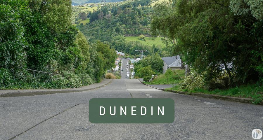 «Dunedin» mit der «Baldwin Street», dem «Chinese Garden» und viel Street-Art {Reisetagebuch «Roadtrip durch Neuseeland mit dem Bus»}