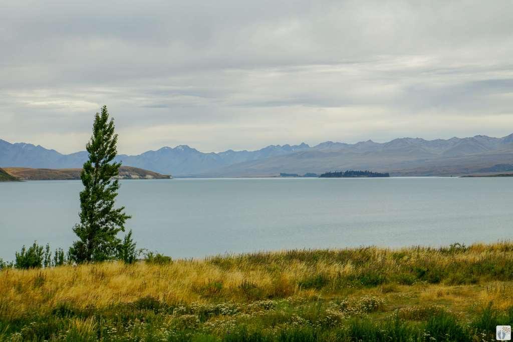 «Lake Tekapo» {Reisetagebuch «Roadtrip durch Neuseeland mit dem Bus»: Tekapo}