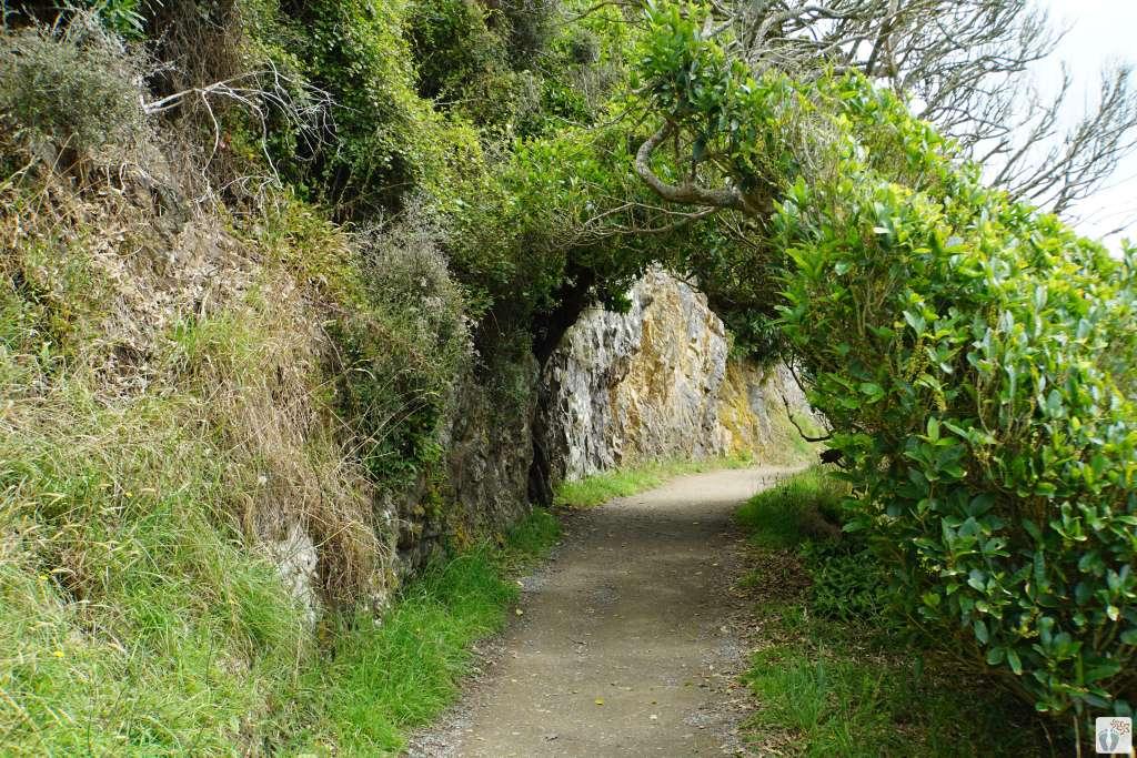 Wanderweg am «Nugget Point» {Reisetagebuch «Roadtrip durch Neuseeland mit dem Bus»: «Catlins Coast»}