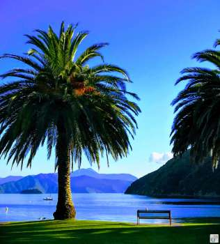 «Picton» {Reisetagebuch «Roadtrip durch Neuseeland mit dem Bus»}