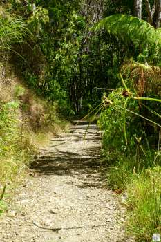 Coastal Walkway: Wanderweg {Reisetagebuch «Roadtrip durch Neuseeland mit dem Bus»: Northern Coromandel}