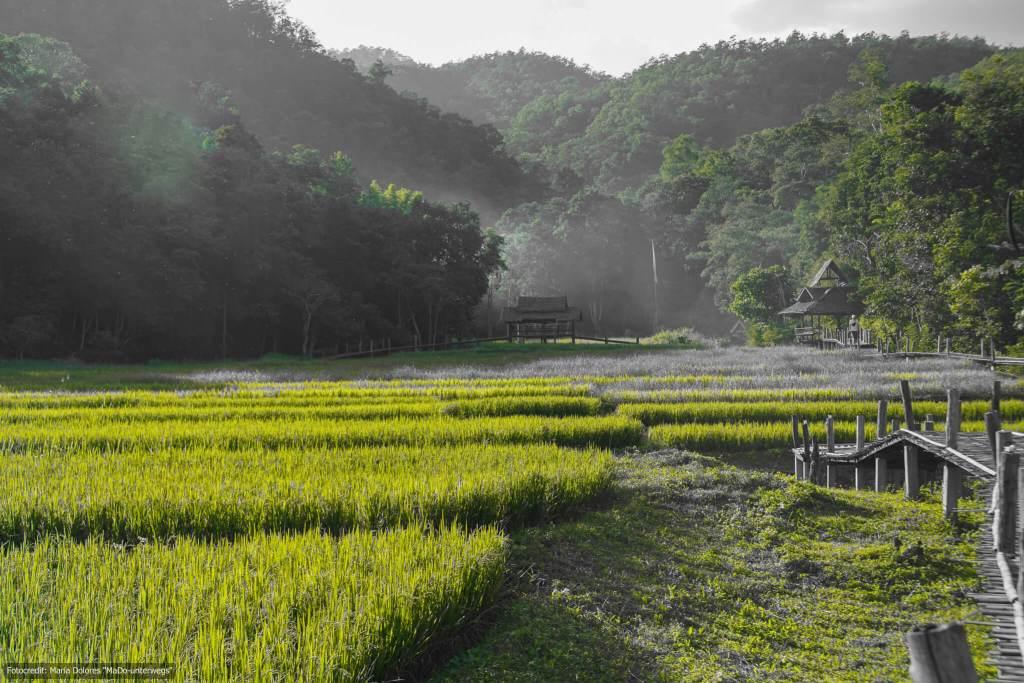 Bamboo Bridge in der Nähe von Pai (Reisetagebuch «Thailand als Alleinreisende ohne Roller entdecken»)