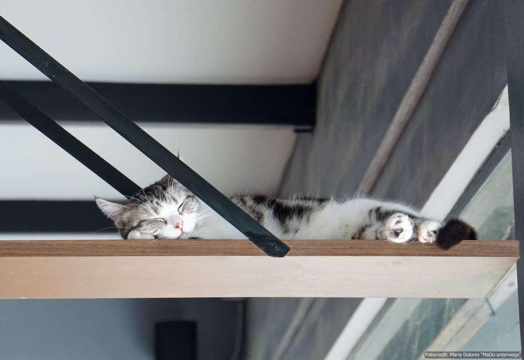 schwarz-weiße Katze auf einer Plattform im Cat 'n' a Cup Café in Chiang Rai (Reisetagebuch «Thailand als Alleinreisende ohne Roller entdecken»)