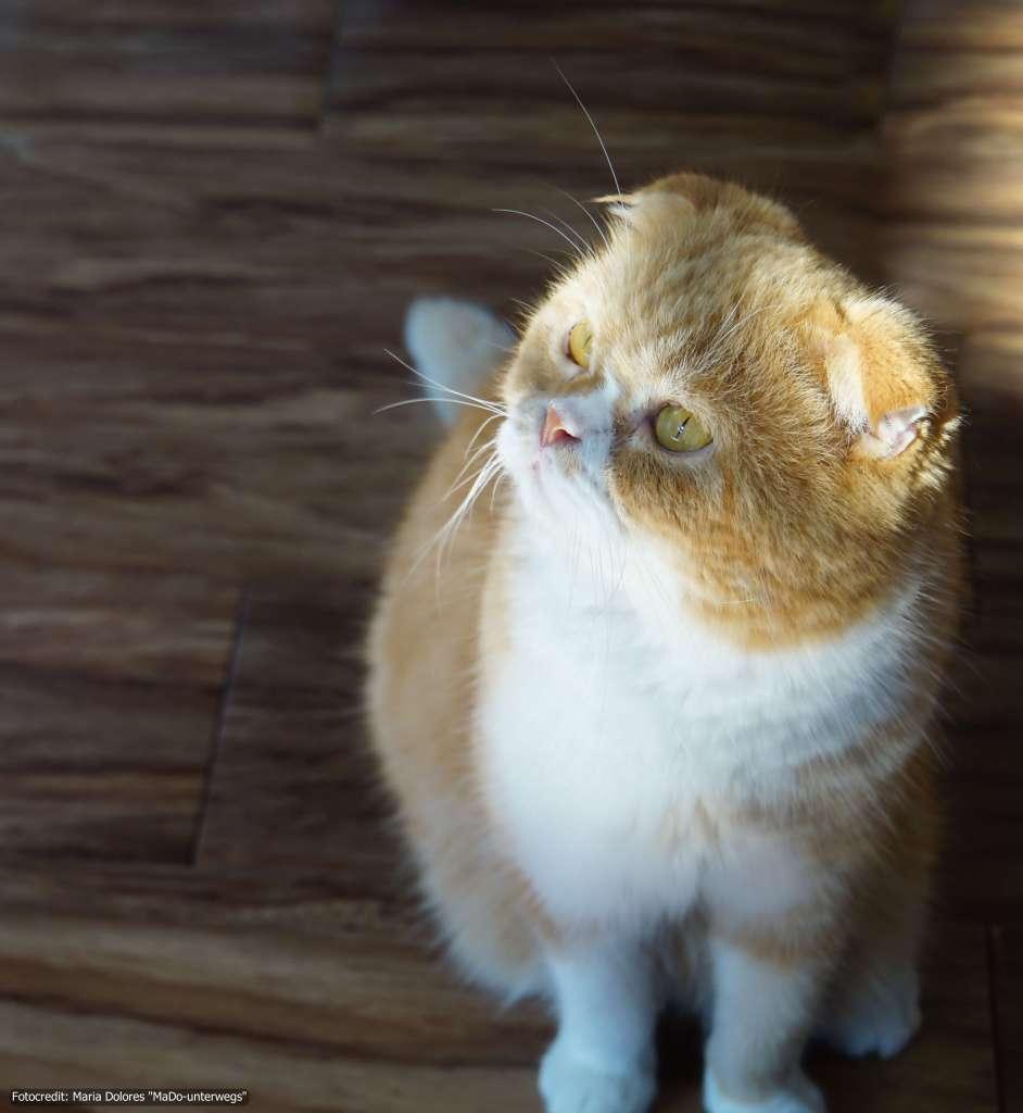 Katze im Cat 'n' a Cup Café in Chiang Rai (Reisetagebuch «Thailand als Alleinreisende ohne Roller entdecken»)