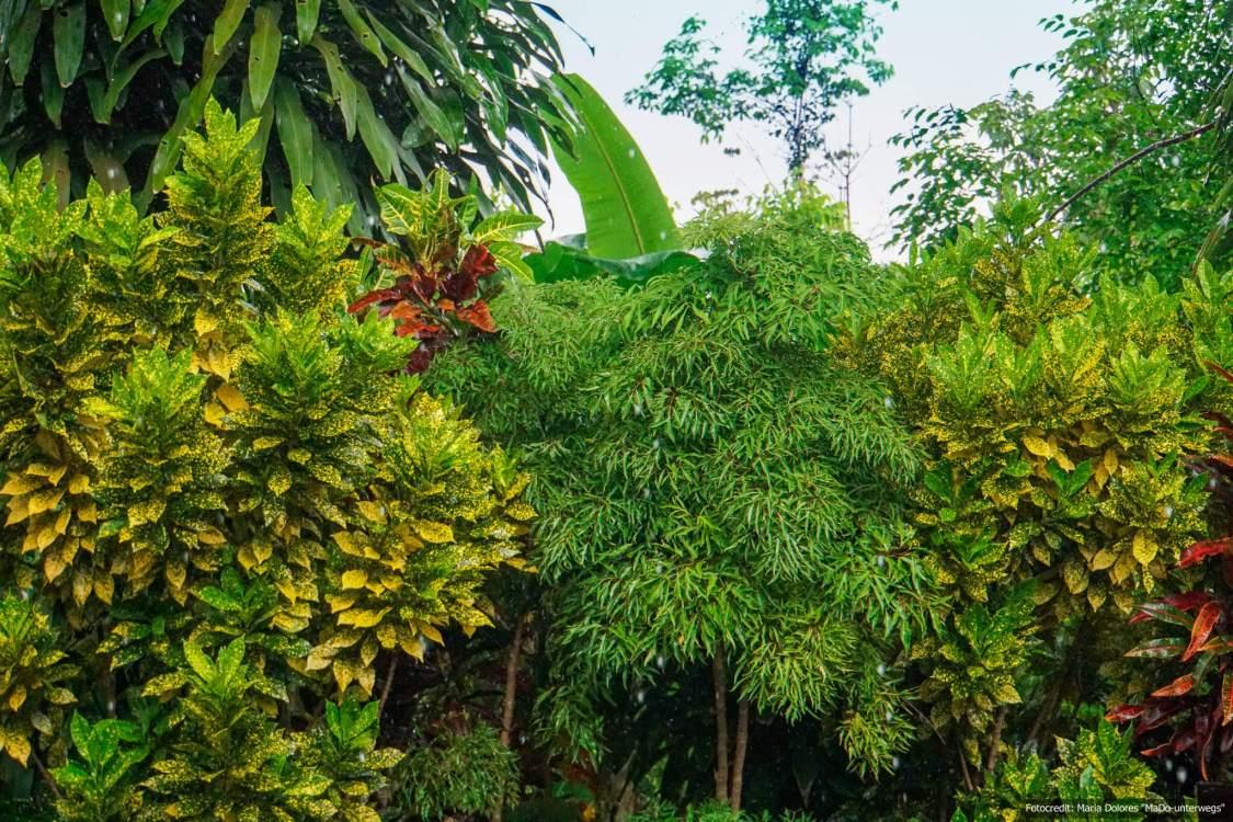 Natur pur auf Ko Chang Ranong (Reisetagebuch «Thailand als Alleinreisende ohne Roller entdecken»)