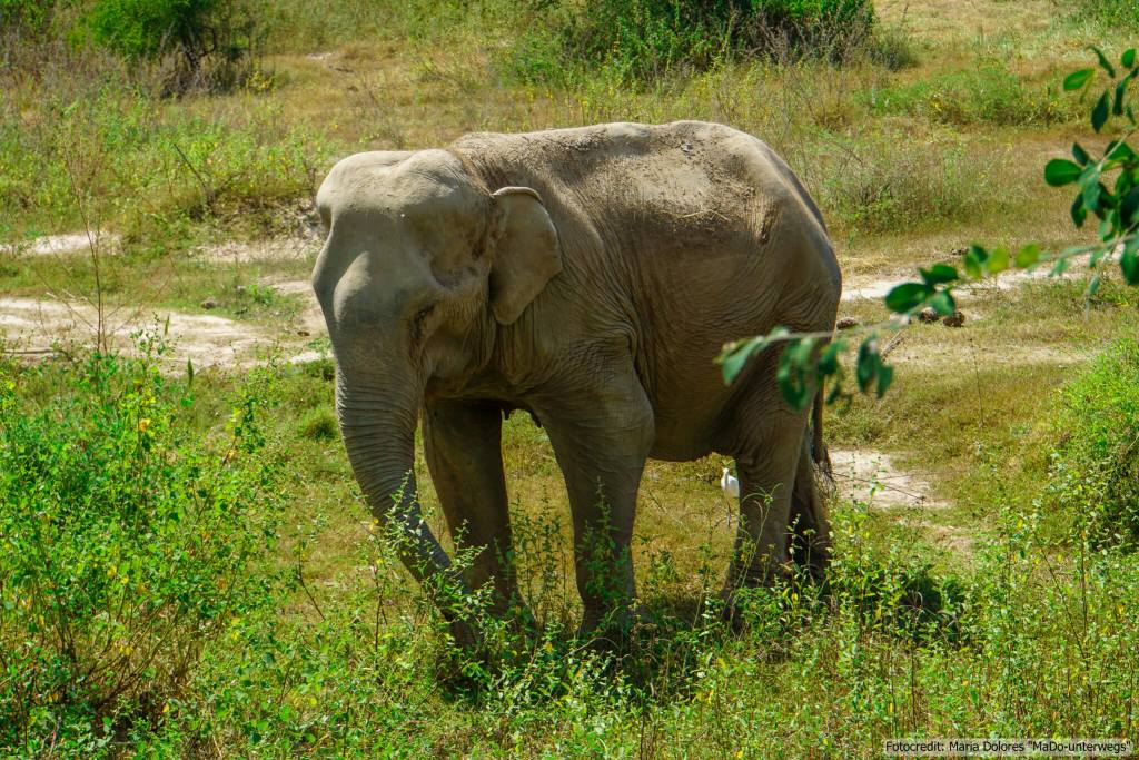 Wildlife Rescue Center and Elephant Refuge in Phetchaburi (Reisetagebuch «Thailand als Alleinreisende ohne Roller entdecken»)