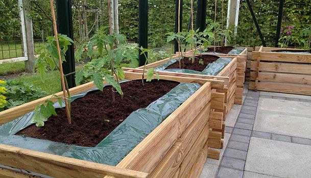 tomatplanter-i-drivhus_Mad-og-Have