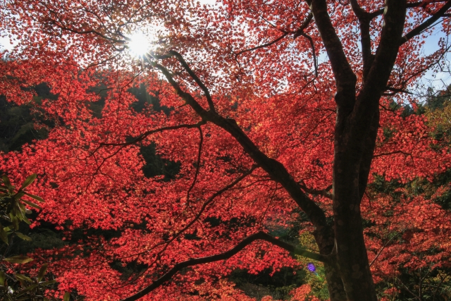 奥津渓の紅葉
