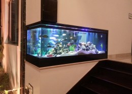 Madoverfish creation of cichlids aquarium