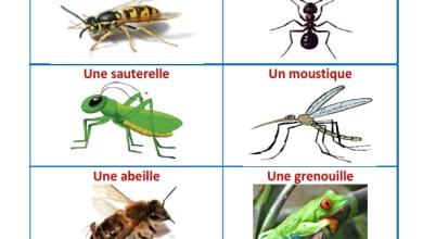 Photo of Les petits créatures – insectes et petits mollusques
