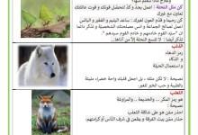 Photo of صفات الحيوانات – دروس نتعلمها من الحيوانات – طباع الحيوانات