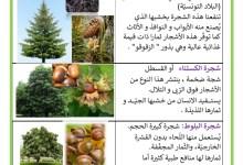 Photo of النباتات التلقائية و فوائدها