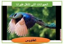 Photo of معلقات : الحيوانات التي تتنقل طيرانا