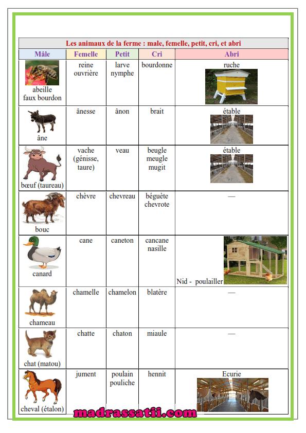 Cris Animaux De La Ferme : animaux, ferme, Animaux, Ferme, Femelle, Petit, موقع, مدرستي