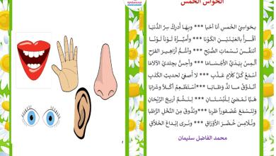 Photo of محفوظات الحواس الخمسة