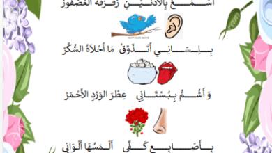 Photo of الحواس الخمسة