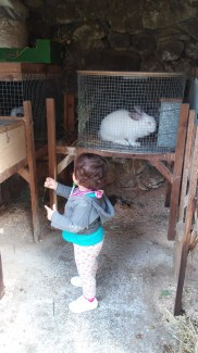 este otro conejo tampoco es Alfie
