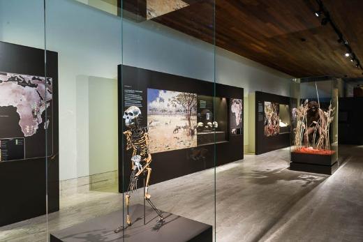 museo+arqueologico+nacional+madrid