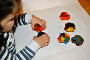 Ceras multicolor