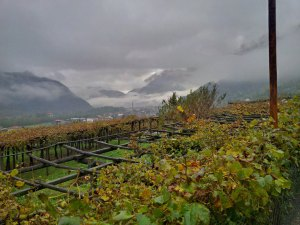 Carema vineyard