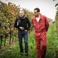 Vineyard manager for Bagnoli