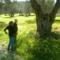 Kerry with Giusseppe Ippolito in the Olive grove