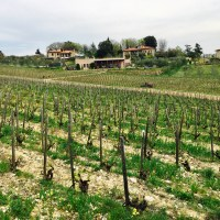 Le-Boncie—vineyard-1