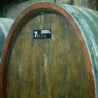 Riesling Sussenberg 2011 in foudre at Domaine Bechtold