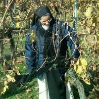 Sister Adriana in the vineyard 12.03.11
