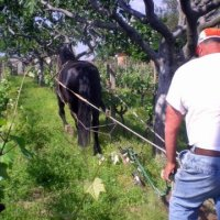 du cropio – working the fields with horse – 1