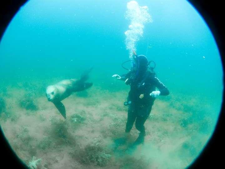 Actividades acuáticas en Puerto Madryn