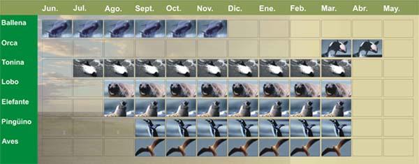 Calendario de Avistaje