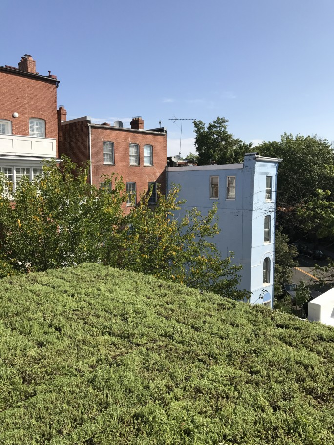 Gardner Architects living roof