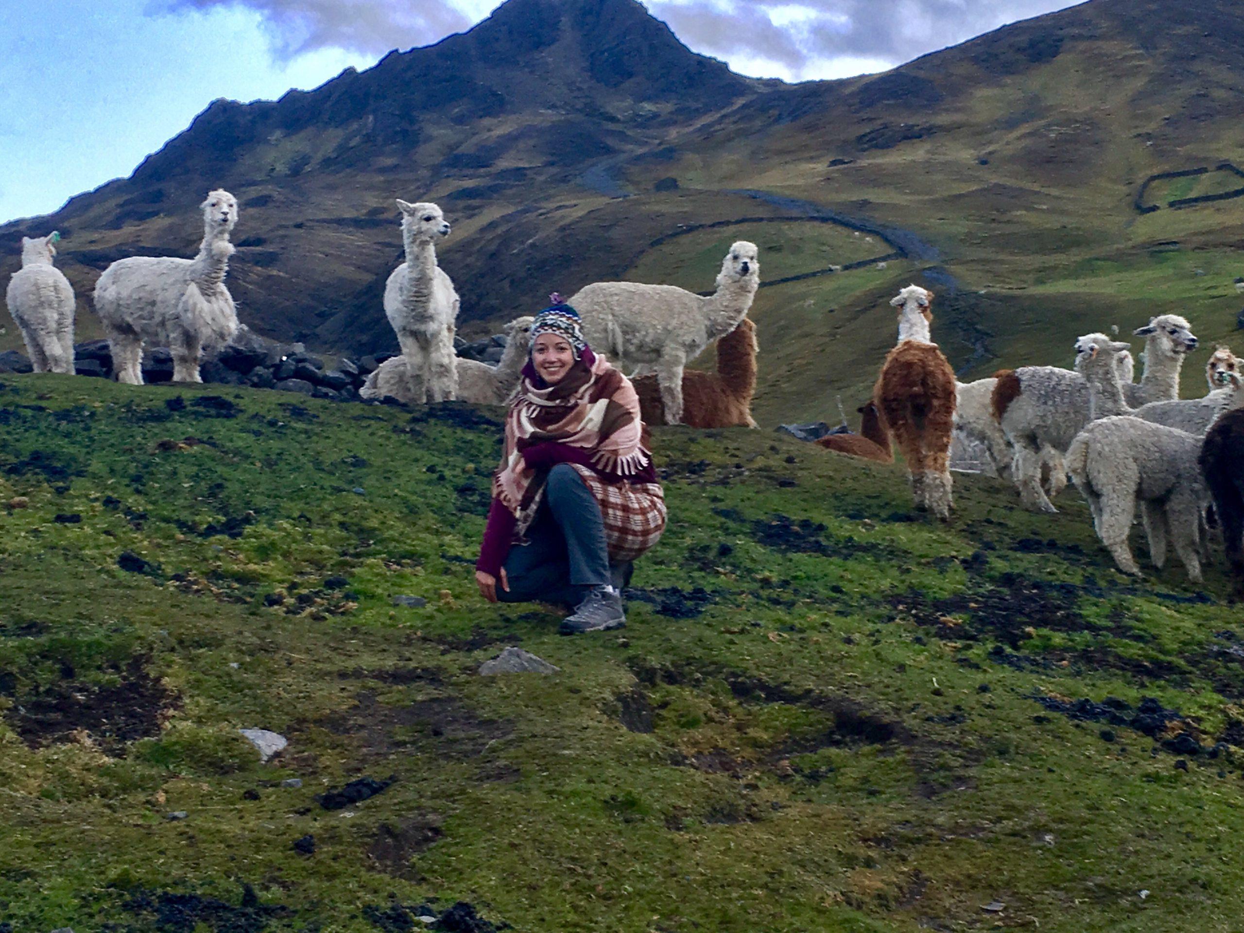 SHOP ONLINE: Meet Campo Alpaca