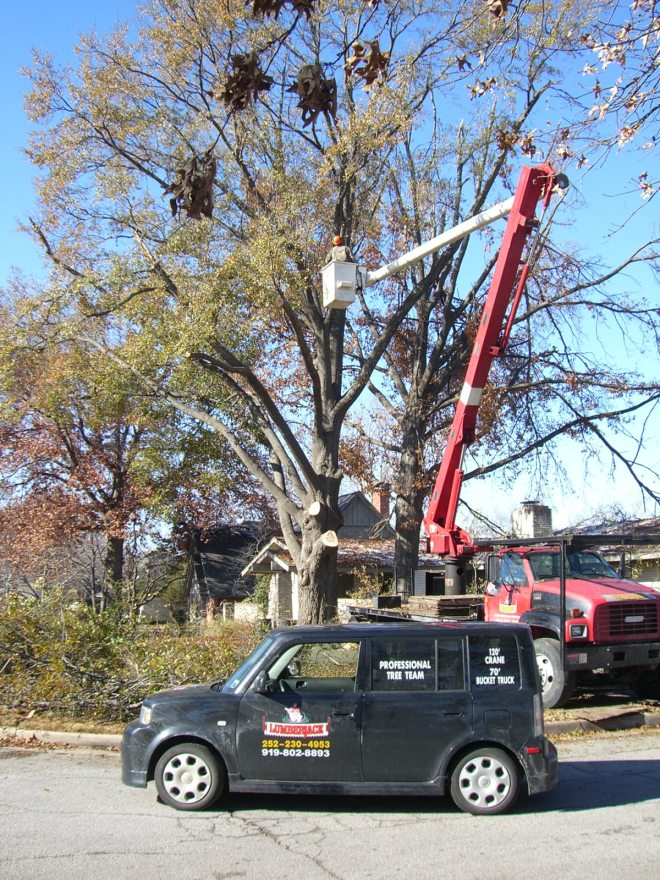 Tree company from North Carolina begins the tree removal.