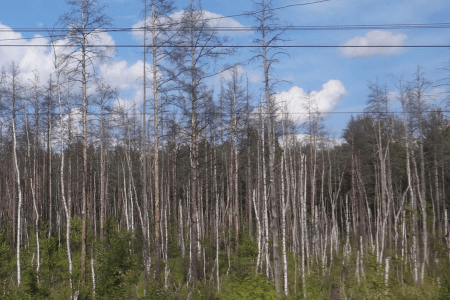 The Iron Scar: A Father and Son in Siberia by Bob Kunzinger with photos by Michael Kunzinger. Image shows a young forest along the tracks with a bright blue sky above