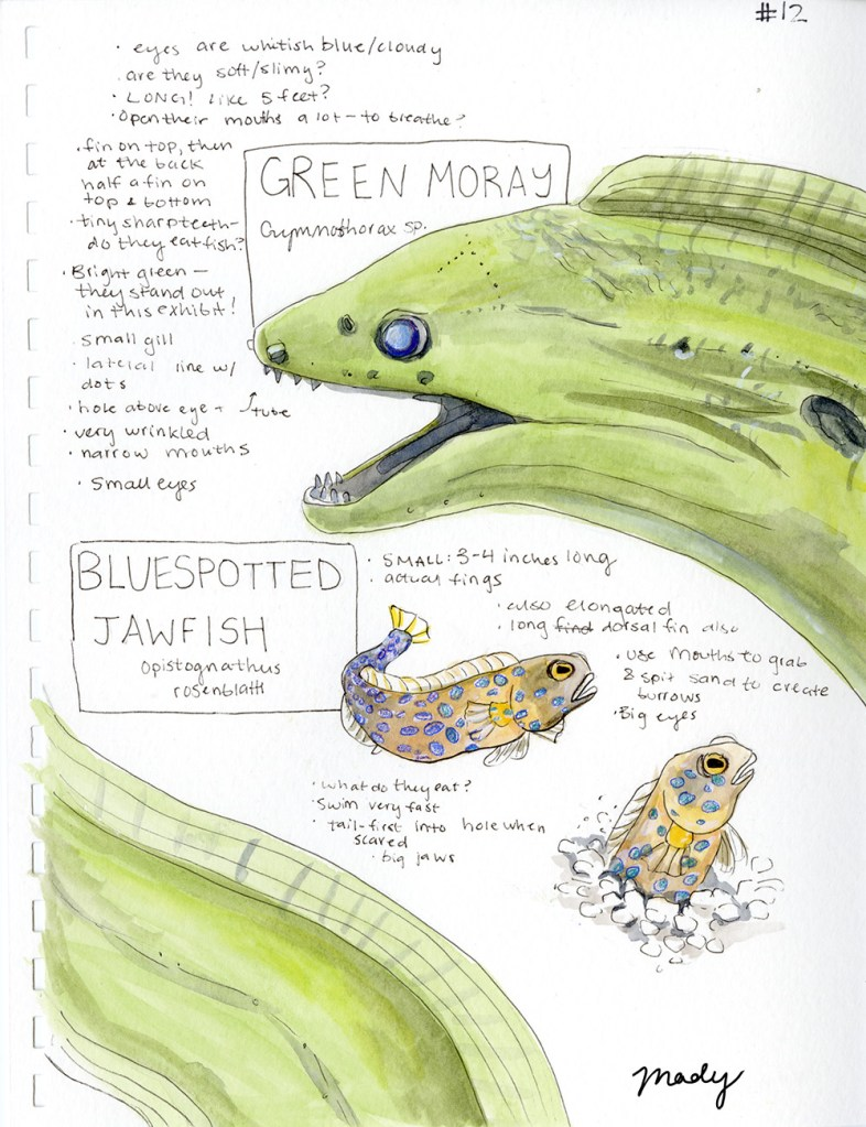 Species Comparison, watercolor and pen, 2019