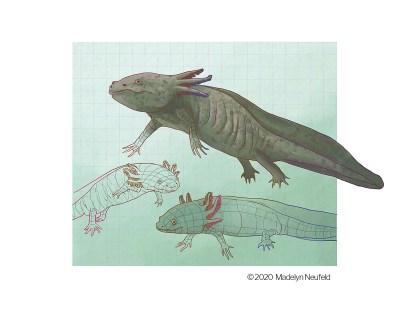 digital science illustration madelyn neufeld