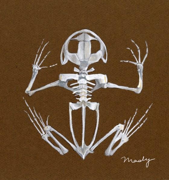 madelyn neufeld color science illustration