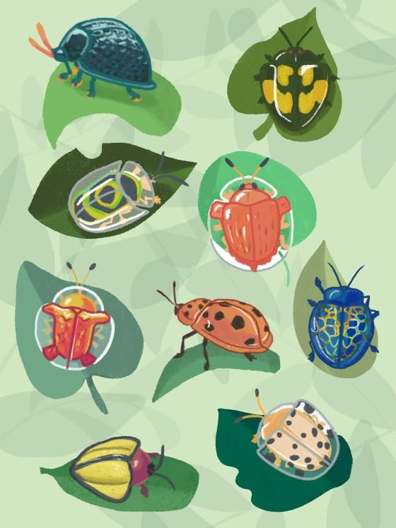 Tortoise Beetles