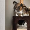 グルメニャンコは、ママクック フリーズドライ・ササミ猫用が大好き