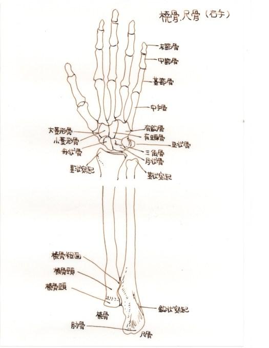 肘、肩などの関節痛