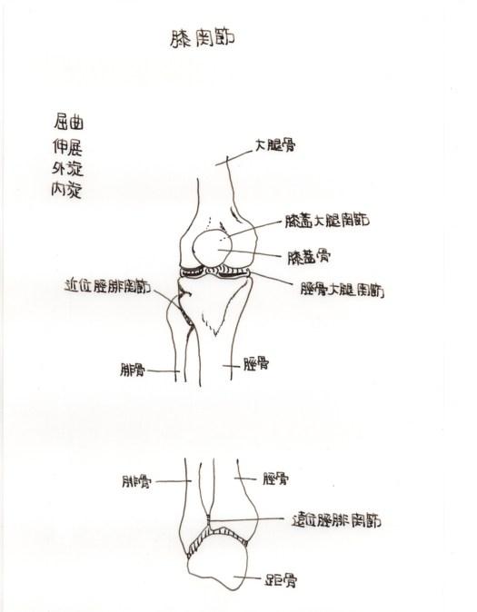 膝の痛みと関節軟骨