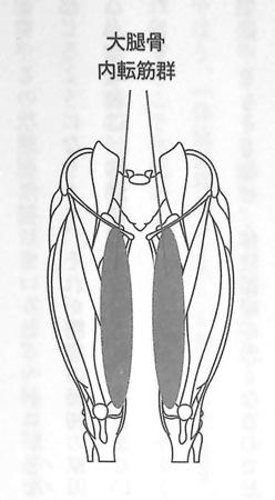 大腿骨内転筋群①P68
