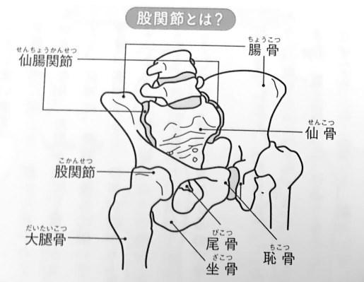 図1 股関節とは すべては股関節から 1章