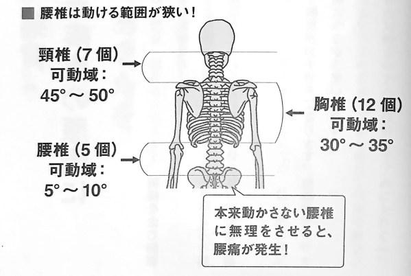 図1 腰椎は動ける範囲が狭い ゆる関節ストレッチ 第1章