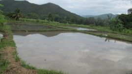 Preparing the rice field