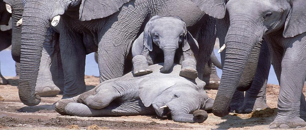 Credit: Elephants Forever